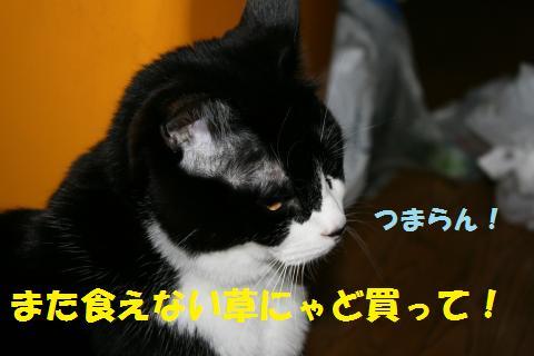 010_convert_20100530220533.jpg