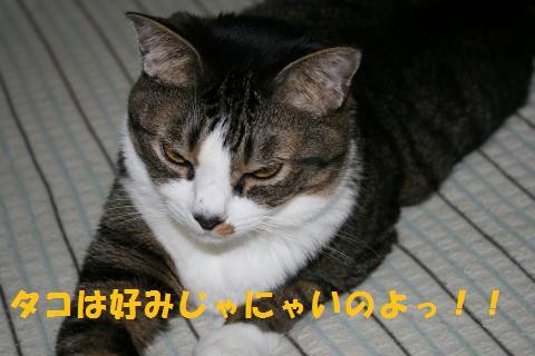 010_convert_20100713002436.jpg