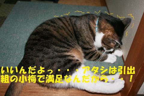 010_convert_20100814165205.jpg