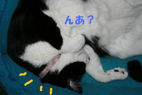 010_convert_20101022235831.jpg