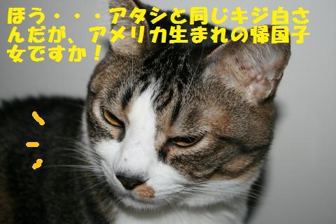 010_convert_20101126212222.jpg