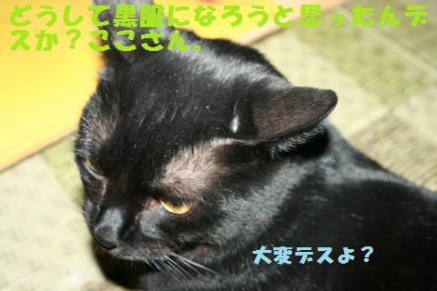 010_convert_20101212163513.jpg
