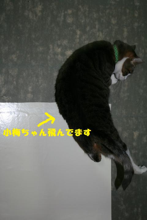 010_convert_20110220230742.jpg