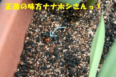 010_convert_20110508172034.jpg