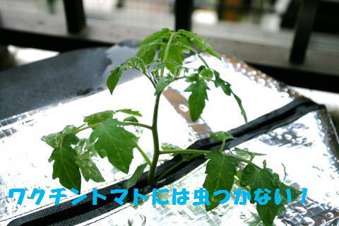 010_convert_20110621203232.jpg