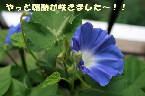 010_convert_20110818152614.jpg
