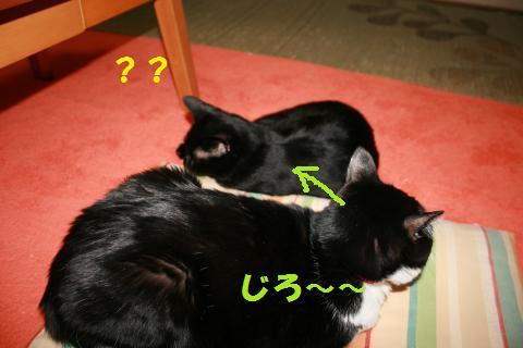 011_convert_20100127233729.jpg