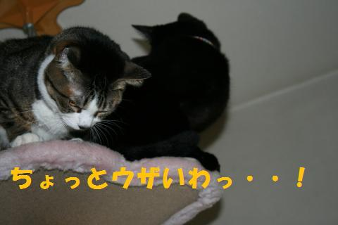 011_convert_20100131200648.jpg
