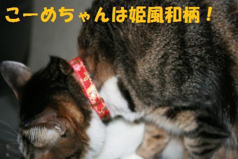 011_convert_20100304223900.jpg
