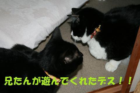 011_convert_20100307205617.jpg