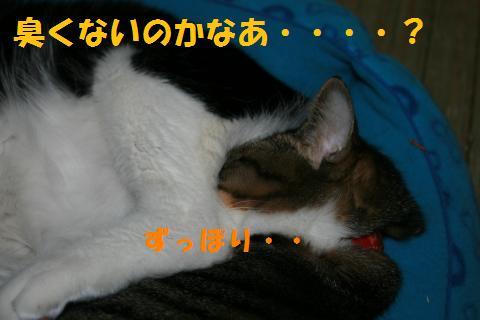 011_convert_20100420224013.jpg