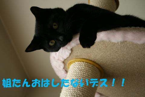 011_convert_20100603231805.jpg