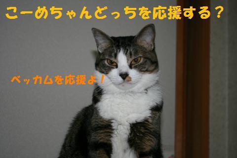 011_convert_20100627223727.jpg