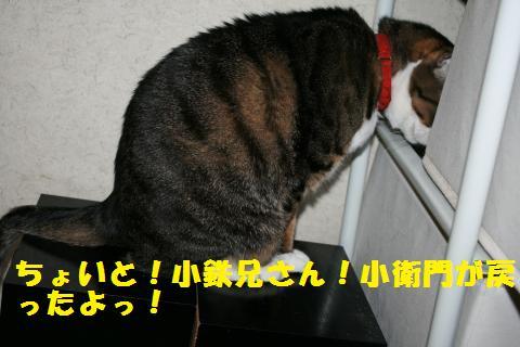 011_convert_20101210222845.jpg
