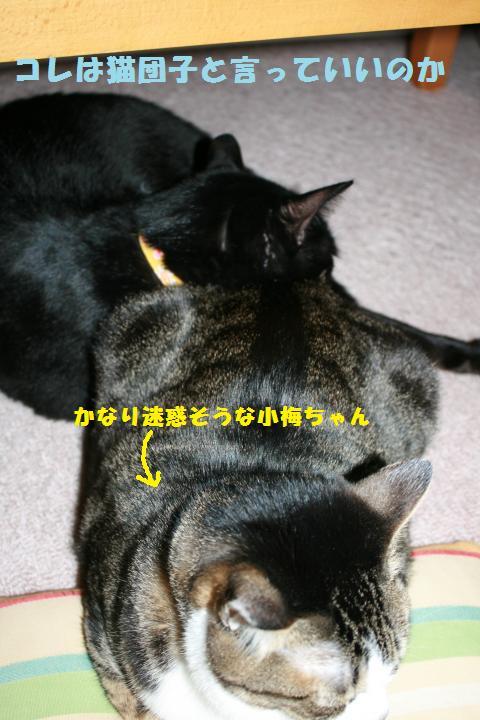 011_convert_20110401184940.jpg