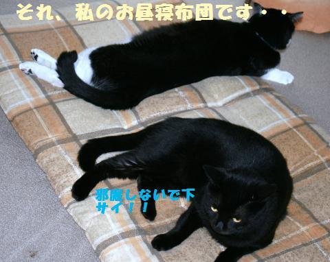011_convert_20110804224650.jpg