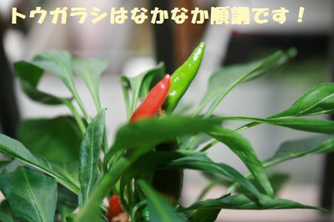011_convert_20110807154902.jpg