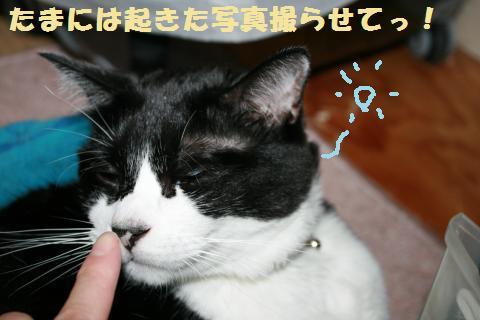 011_convert_20110825212256.jpg