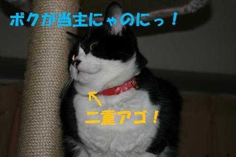 012_convert_20100205225144.jpg