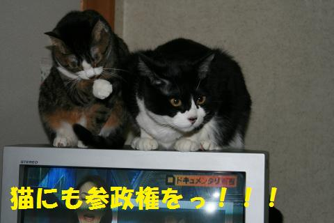 012_convert_20100403184554.jpg