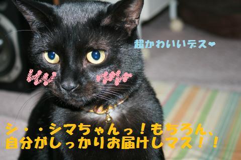 012_convert_20110109232310.jpg