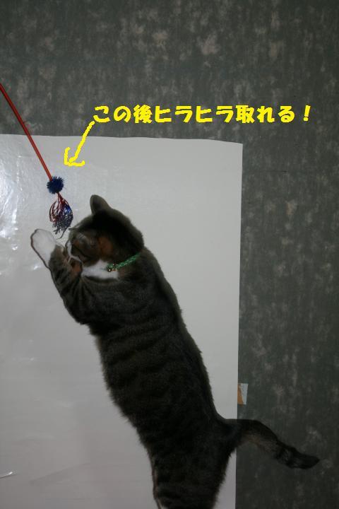 012_convert_20110220230917.jpg