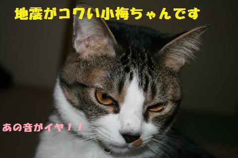 012_convert_20110408185732.jpg