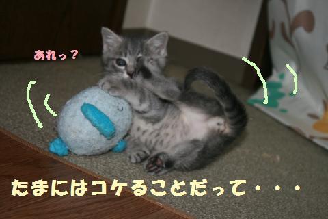 012_convert_20111027183129.jpg