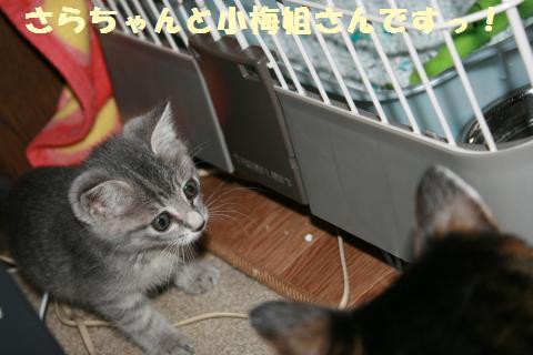012_convert_20111031121214.jpg