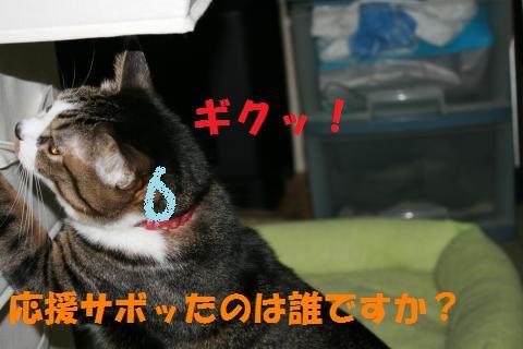 013_convert_20100227235121.jpg
