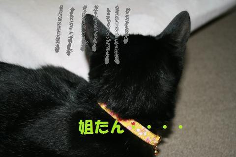 013_convert_20100307205752.jpg