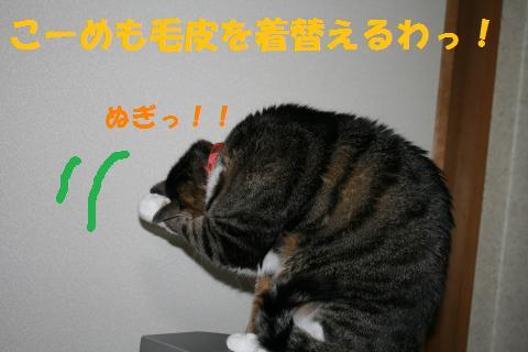 013_convert_20100320231130.jpg