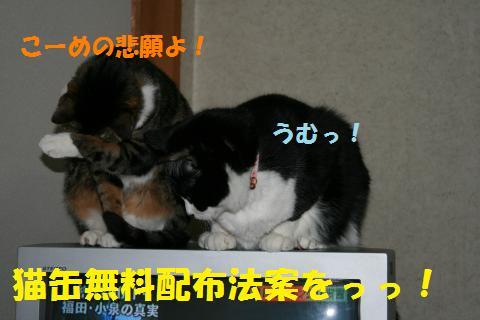 013_convert_20100403184723.jpg