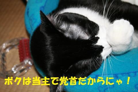 013_convert_20100502233017.jpg