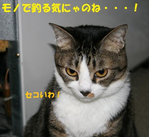 013_convert_20100702194847.jpg