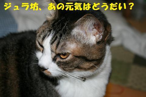 013_convert_20101117205451.jpg
