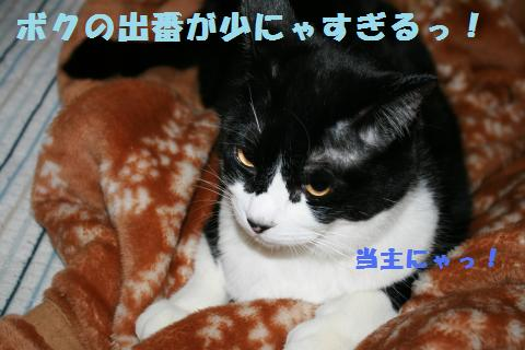 013_convert_20101127230857.jpg