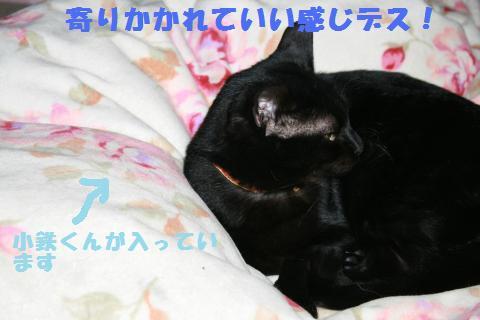 013_convert_20110210173642.jpg