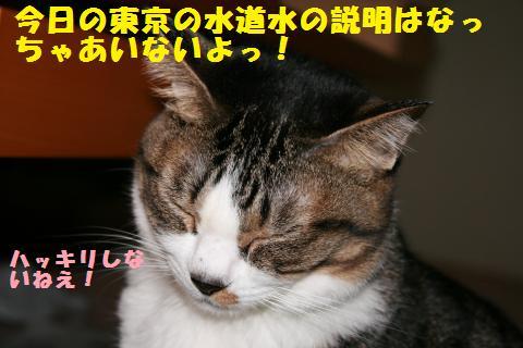 013_convert_20110323224339.jpg