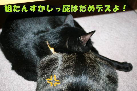 013_convert_20110401185119.jpg
