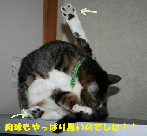 013_convert_20110419204519.jpg