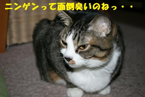 013_convert_20110422205912.jpg