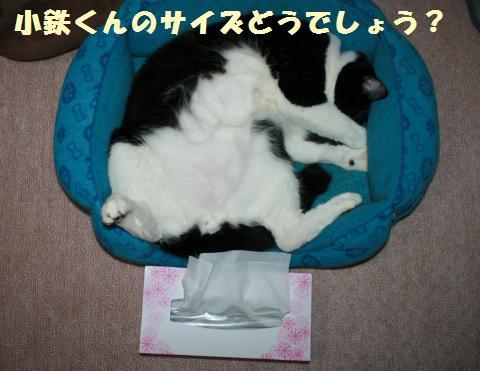 013_convert_20110605214619.jpg