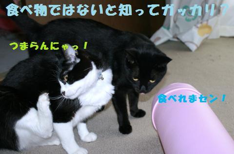013_convert_20110628230342.jpg