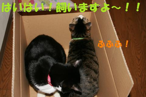 014_convert_20100122222828.jpg