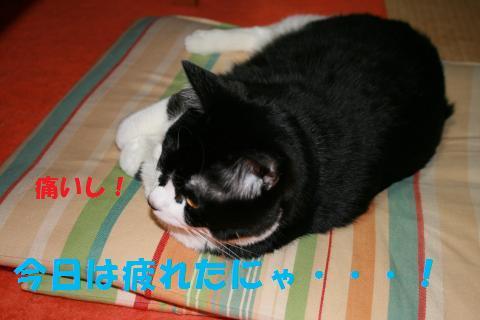 014_convert_20100207224556.jpg