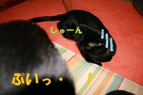 014_convert_20100209223019.jpg