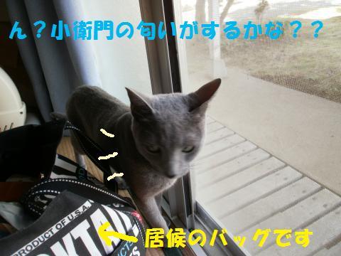 014_convert_20101013191508.jpg