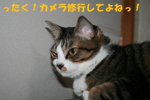014_convert_20101018171410.jpg