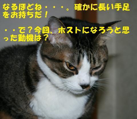 014_convert_20101031164632.jpg